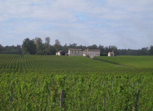 Vista de les vinyes que es troben a la ruta del riu Garona